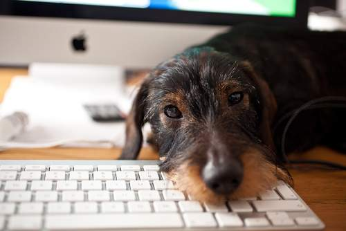 Dog on keyboard